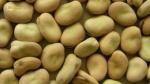 Чем полезны бобы черные – польза и вред, пищевая ценность и химический состав, вред бобов для организма, применение в кулинарии