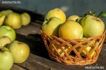 Польза яблоки антоновка – Яблоки Антоновка: полезные свойства, калорийность