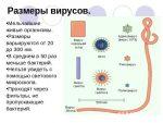 Противовирусные свойства – разновидности, основные характеристики, принцип действия, показания, противопоказания, основные характеристики